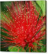 Flower Optics 3 Canvas Print