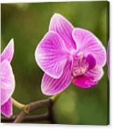Flower - Pink Orchids Canvas Print
