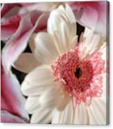 Flower Pink-white Canvas Print