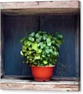 Flower Pot In A Window Canvas Print