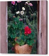 Flower Pot In Window Canvas Print