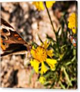 Flower Power Bug And Butterfly Canvas Print