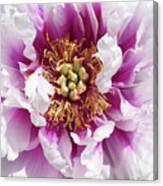Flower Power In Pink Canvas Print