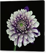 Flower Rhythm 1 Canvas Print