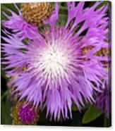 Flower Snowflake Canvas Print