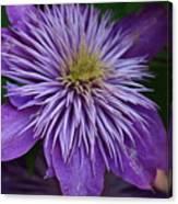 Flower Splash Canvas Print