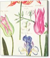 Flower Studies  Tulips And Blue Iris  Canvas Print
