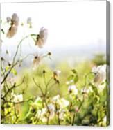 Flower Valley Canvas Print