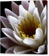Flower Waterlily Canvas Print