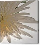 Flower-white Canvas Print