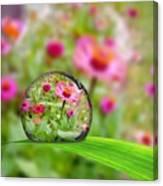 Flowerdrop Canvas Print