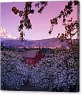 Flowering Apple Trees, Distant Barn Canvas Print