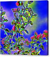 Flowering Brittle Bush In An Altered State Canvas Print