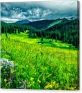 Flowering Colorado Mountain Meadow Canvas Print
