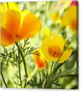 Flowering Garden Canvas Print