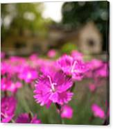 Flowering In The Front Canvas Print