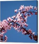 Flowering Of The Plum Tree 4 Canvas Print