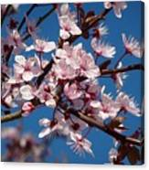 Flowering Of The Plum Tree 5 Canvas Print