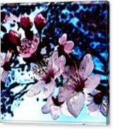 Flowering Of The Plum Tree 7 Canvas Print
