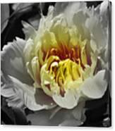 Flowering Peony In The Night Garden Canvas Print