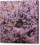 Flowering Pink In Spring Canvas Print