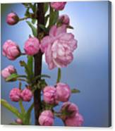 Flowering Pink On Blue Canvas Print
