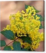 Flowering Plant 032514a Canvas Print