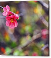 Flowering Quince In Spring Canvas Print