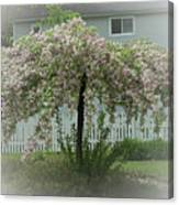 Flowering Tree By Earl's Photography Canvas Print