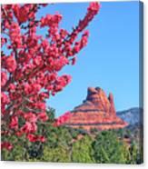 Flowering Tree - Sedona Red Rock Canvas Print