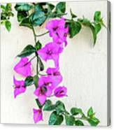 Flowering Vine On A Mexican Wall Canvas Print