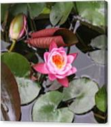 Flowering Water Lily Canvas Print