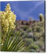 Flowering Yucca Canvas Print