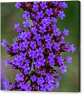 Flower_lavender 1072v Canvas Print