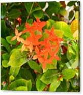 Flowers And Foliage Canvas Print