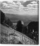 Flowers At Table Rock Overlook In Black And White Two Canvas Print