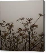 Flowers In California Fog Canvas Print
