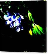 Flowers In The Dark Canvas Print