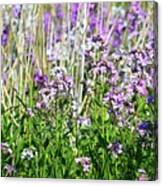 Flowers In The Field  Canvas Print