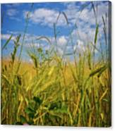 Flowers In The Wheat Canvas Print