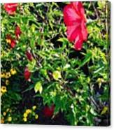 Flowers Of Bethany Beach - Hibiscus And Black-eyed Susams Canvas Print