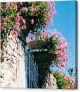 Flowers Of Panzano Photograph Canvas Print