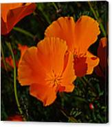 Flowers Of The Andes Canvas Print