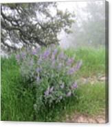 Flowers On A Foggy Day Canvas Print