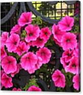 Flowers On Iron Grate In Venice Canvas Print