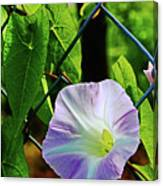 Flowers On The Fence 1 Canvas Print