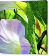 Flowers On The Fence Canvas Print