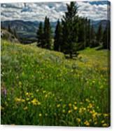 Flowers On The Hillside Canvas Print