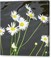 Flowers On The Water Canvas Print
