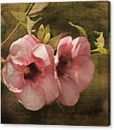 Flowers - Purple Allamanda 2 Canvas Print